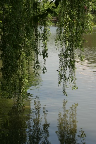 Willow Branches, Shaw's Gardens, Saint Louis, Missouri