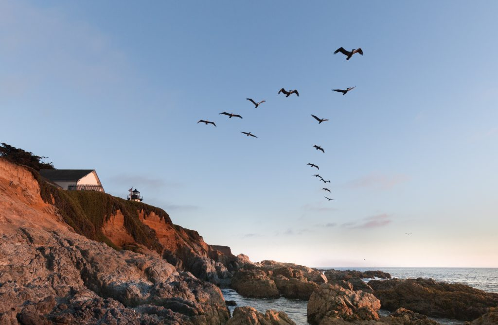 Geese over Half Moon Bay, California
