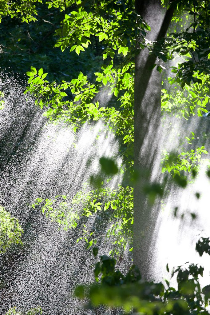 Falling Water, National Arboretum, Washington, DC